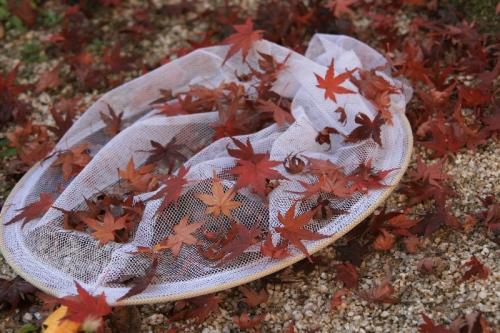 虫から落ち葉に代わって