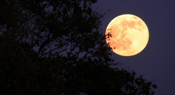 今宵の満月.jpg