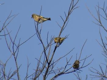 野鳥4.jpg